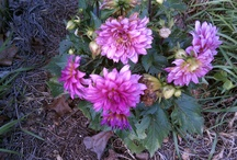 My Flower Garden / by Zappala Home