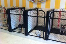 Doggy Room Ideas