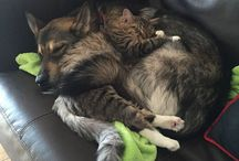 cat and dog? it is a love