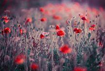beautyfull fotos