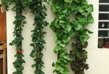 Vertical Plants