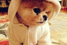 cachorritos ♡♡