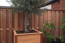 #boombakken #olijfboom / hardhouten boombakken voor olijf en vijgenbomen