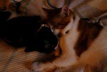 Heather / mi preciosa gatita