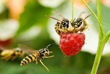 Bán Mật Ong Nguyên Chất / Địa chỉ mua mật ong uy tín :  Trên thị trường hiện nay xuất hiện hàng trăm website rao bán Mật Ong Rừng với đủ loại từ chất lượng thấp (mật ong nuôi) đến chất lượng cao (mật ong hoa rừng) và đủ mọi giá cả.   Liên hệ đặt mua hàng :  Email: cuahangmatong.com@gmail.com Website: cuahangmatong.com Hotline: 0908.65.7939