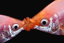 Fish ideas