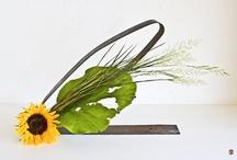 Flowers: sunflowers