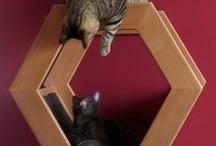 cats bedroom