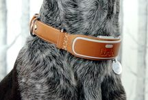 Stylish Dog Products, Accessories + Technology / From cool dog collars for your furry best friend to tech and stylish modern accessories, we've rounded up some of our favorites in partnership with LinkAKC.