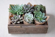 Plant / by Ann-Marie Espinoza