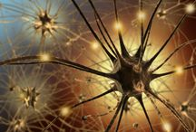 Body Human:  Brain Notes