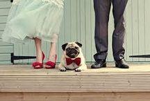 wedding and Dog