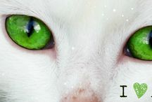 Animal Facebook Covers / Facebook Covers for Animal-Lovers
