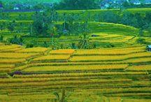 Lahan Siap Bangun Se Jawa Barat & Jawa Tengah