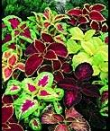 Garden - shady colour