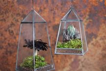 Botanics, Terrariums and planters. / An encyclopedia of beautiful planters, terrariums and all things botanical.