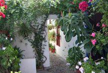 Los Patios de Córdoba / Los Patios Cordobeses declarados por la UNESCO Patrimonio Cultural Inmaterial de la Humanidad.
