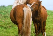 Hästar <3