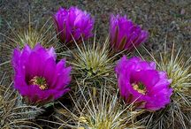 Crazy for Cacti / by Michelle Sergeant