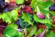 Neuronilla | Por qué es importante el color de la lechuga / El color de las hojas de las lechugas revela la velocidad con la que actúan sus antioxidantes.