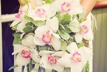 Wedding Ideas to Dream For