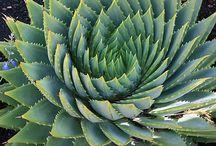 Cactus y plantas