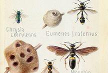 Nature / 動植物など自然のもの。