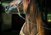 ●•Horse....•●