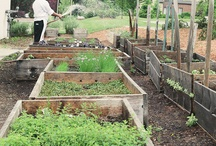 L'Andana's Garden