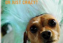 Crazy About Pups / A board to honor our new book RABID by Pamela Redmond Satran. Are you crazy about your dog or just crazy? / by Bloomsbury