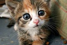 DOMESTIC CATS, KITTENS, PUPPIES, SQUIRRELS & BABY ANIMALS
