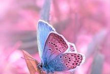 betterflies