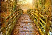Ladders and bridges