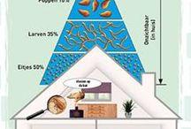Infographics / infographics beaphar