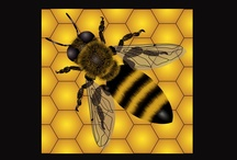 Protect Our Honeybees and #BoycottBayer  / Please join the efforts of Walter Haefeker, President of the European Professional Beekeepers Association (EPBA) and Boycott Bayer products to show the shareholders that honeybees must be protected!