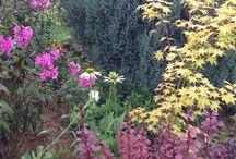 Seasons in my garden / Gardening