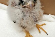 Baby Birds / Some of the adorable babies we see down at RWRC