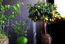 Avant Garden / by Incognita Nom de Plume
