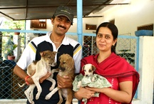 Volunteers at Animal Aid / Volunteers are vital for helping rescued street animals recover. Injured and ill street animals at Animal Aid in Udaipur have been blessed by the love of hundreds of volunteers from all around the world. Take a look at their love and we hope you'll be inspired to join in the uplifting work of helping animals too!