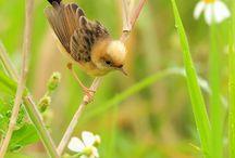 Wren Day Bird Floral Flower
