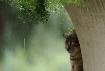 Люблю Дожди
