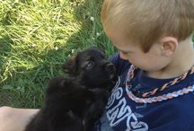 German shepherd / Puppy love / by April Darren Guindon
