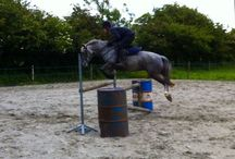 Rowdown Alice. / Pony new forest, now out on lease.