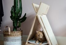 Cats & Interior / ...what I love the most :)