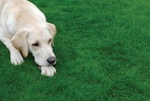 Spot Repair  / Time to create that perfect lawn, and repair any spots!  http://www.wolfgarten-tools.co.uk  #grass #garden #dog