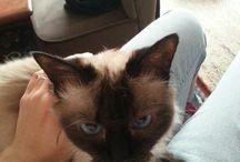 Catsitting /  portraits des chats en vacances chez moi !