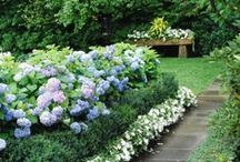For My Garden / by Brandy Marsh