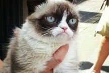 gato mal-humorado/grumpy cat / by Joseph Di Lorenzo
