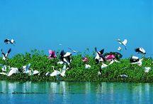 Pantanal & Matto Grosso