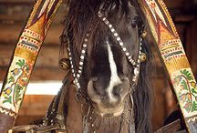 Shaft bow harness / Traditional Uralic horse harness / Russian, Baltic and Finnish has typical harness with shaft bow. Finnhorse was able to pull twice and more of its own body weight and this harness type was good aid for the pull.